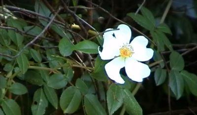 Faune et flore en corse llla fleur du maquis