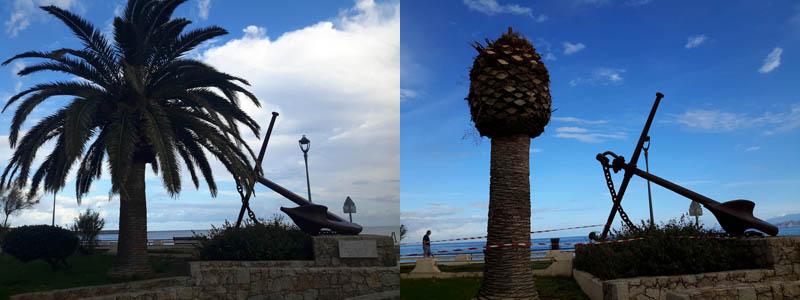 palmiers malades île rousse