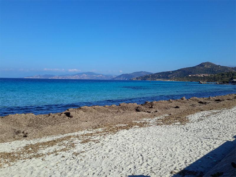 les posidonies sur la plage d'île Rousse