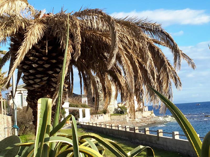 palmier de Miomo
