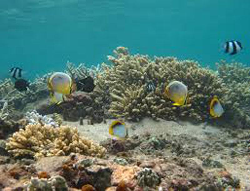les fonds sous marins de la corse